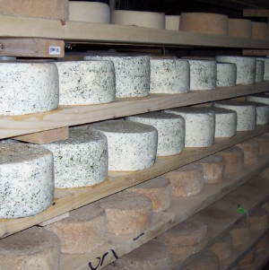 Harpersfield Cheese