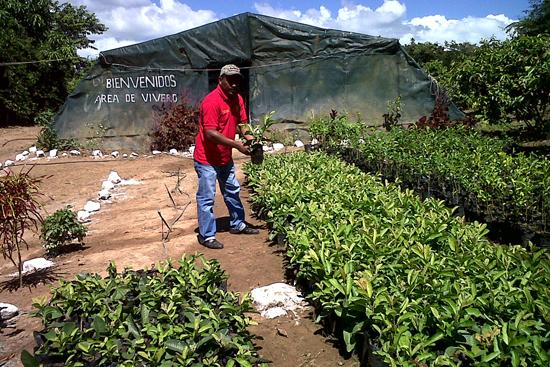 Casas de cultivo del fundo zamorano vicente tejera for Viveros en zamora