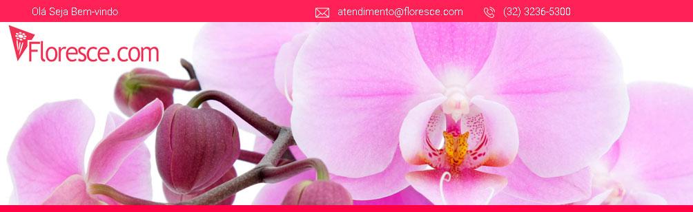 FLORESCE.COM | Floricultura Online, Flores, Cestas e Presentes