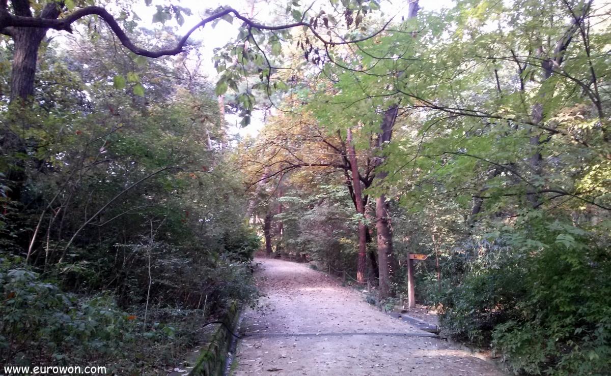 Bosque coreano en otoño