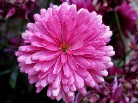 feliz, color de rosa, felicidad