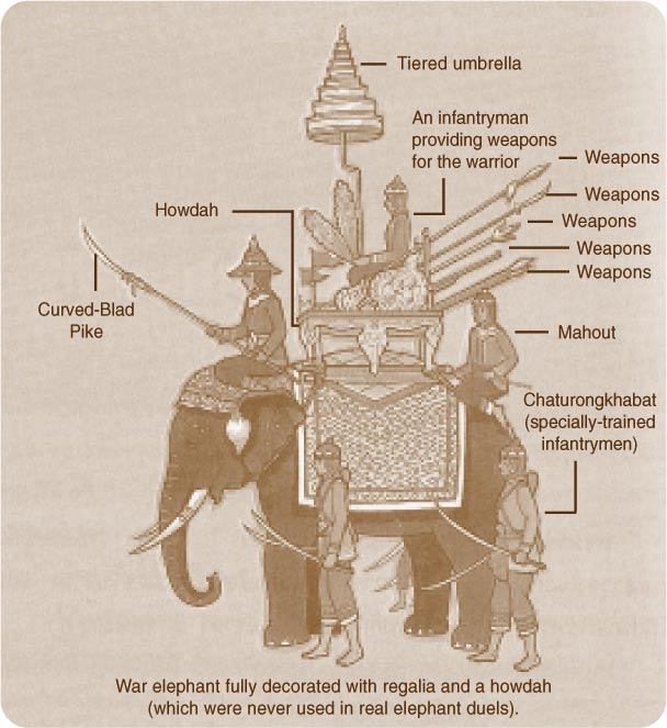 Birmans et Siamois Elephant_07