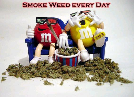 I smoke weed everyday