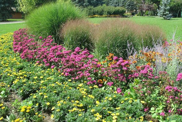 Yellow gazania, phlox against miscanthus backdrop at James Gardens Etobicoke by garden muses: a Toronto gardening blog
