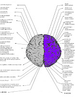 Brain Function Chart3