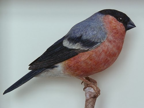 02-Bullfinch-Johan-Scherft-Living-Paper-Birds-Sculptures-Watercolours-www-designstack-co
