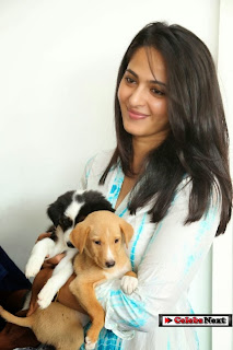 Actress Anushka Phtoos in Jeans at Blue Cross Pet Carnival Press Meet  0062.jpg