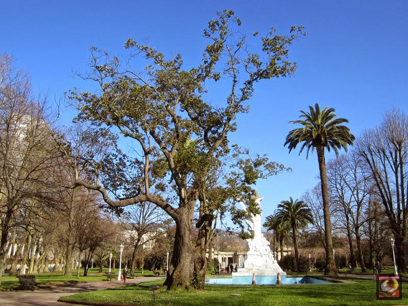 Alcanforero (Cinnamomun camphora) en el parque de Doña Casilda de Bilbao