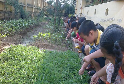 Phòng ngừa biến đổi khí hậu mẫu giáo lớp