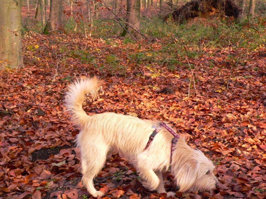 Spaziergang Winter Kalt Hund Wochenende schnüffeln Laub