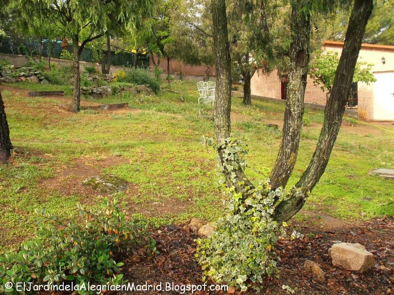 El jard n de la alegr a yo salgo con la lluvia como los for Caracoles de jardin como eliminarlos