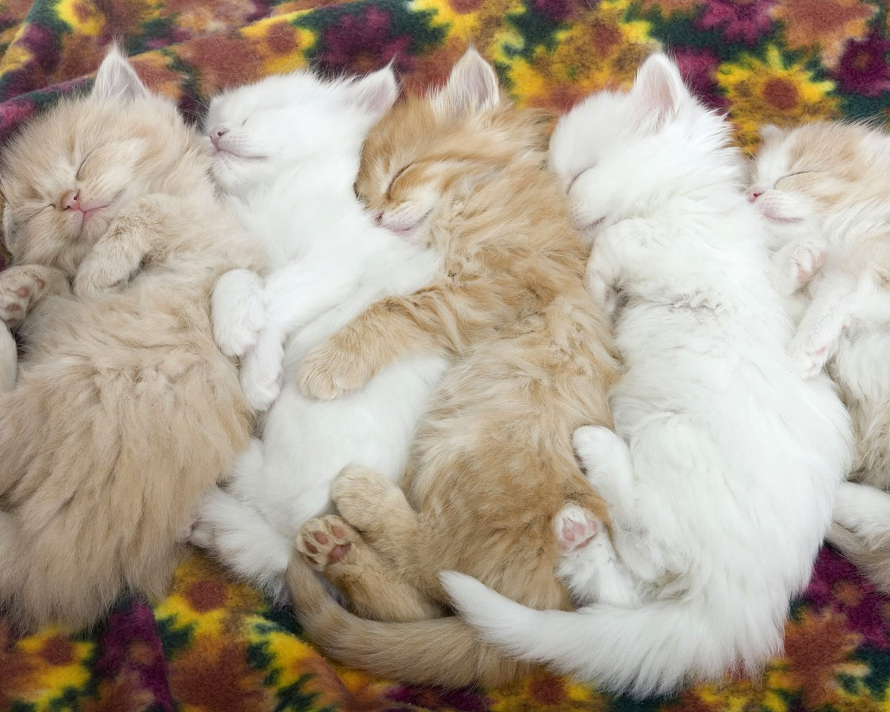 Funny Kitten And Puppy Sleeping Picture
