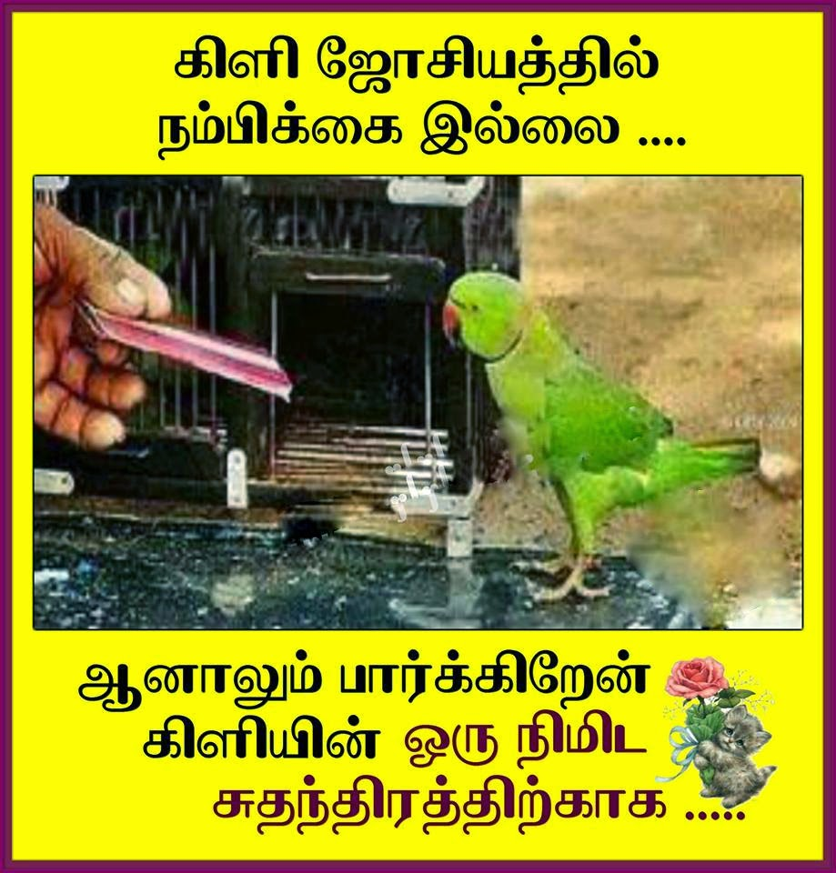 Parrot astrology - Tamil Kavithai Photo