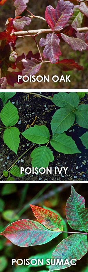 planta o de su savia Hay tres tipos principales de riesgo en contacto