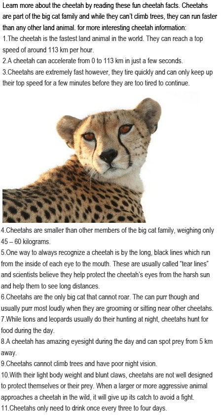 Facts about cheetahs for kids