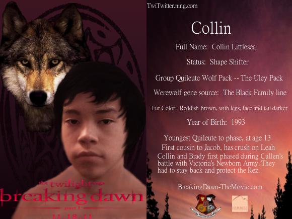 Gallery Collin Littlesea Wolf Form Twilight Wolf Pack Seth