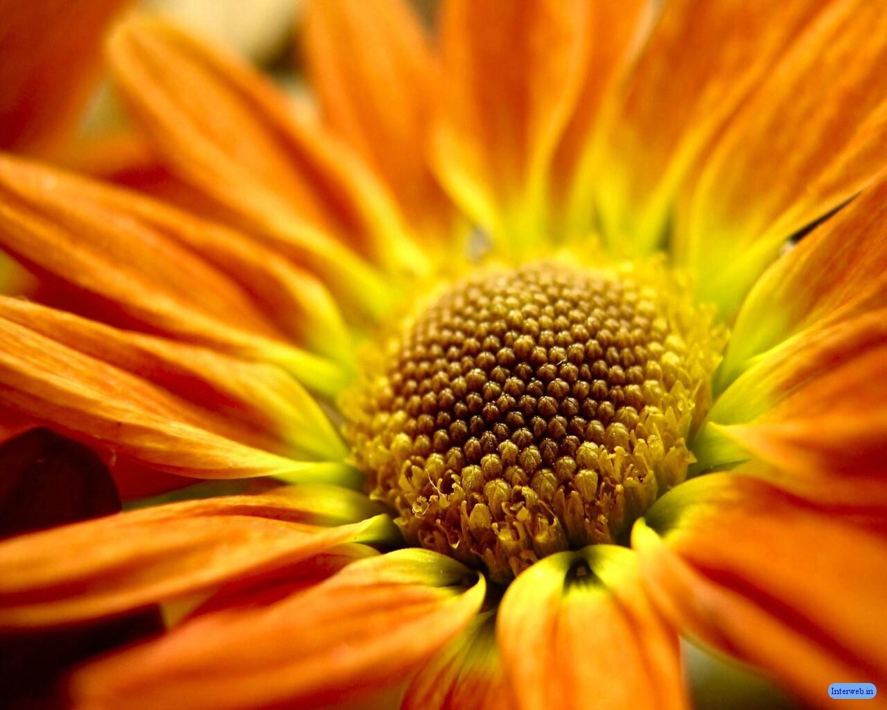 http://2.bp.blogspot.com/-uvcf1T-vfR8/T_8ZcYvuU0I/AAAAAAAADlg/qkjmicRLghc/s1600/Nature+desktop+wallpaper.jpg