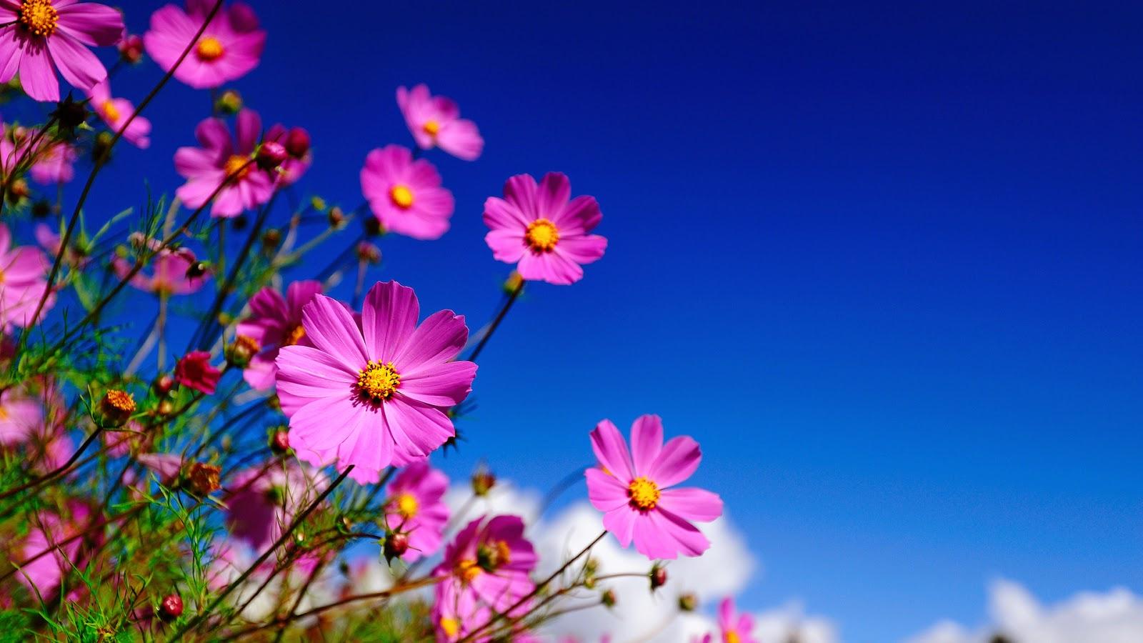7 nice flowers wallpaper desktop background full screen