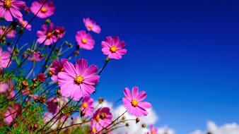 #8 Lovely Flowers Wallpaper Desktop Background Full Screen