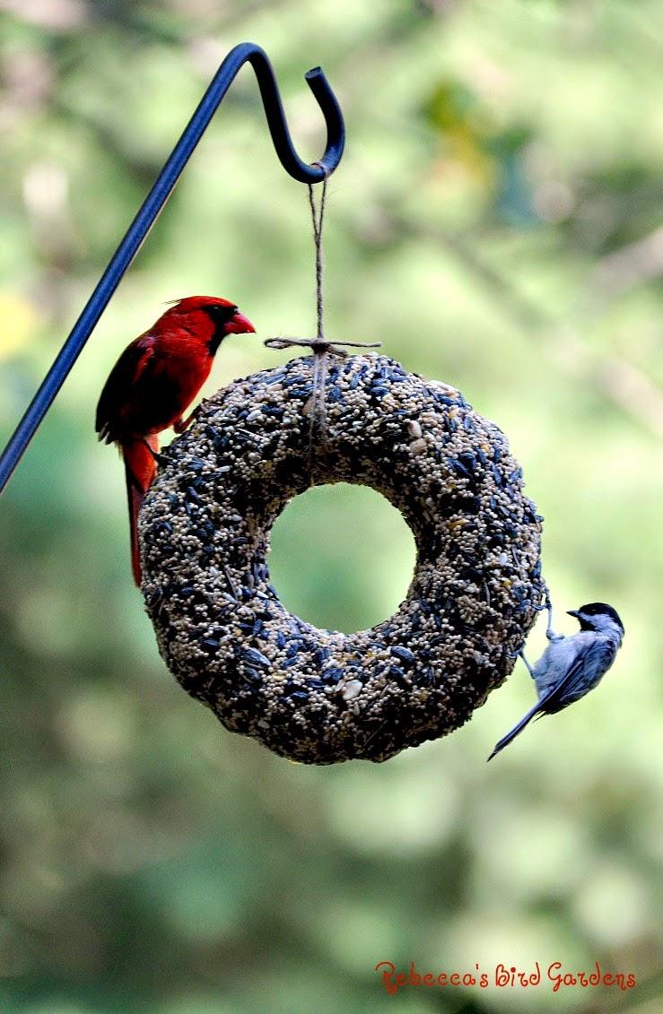 Rebecca 39 S Bird Gardens Blog Diy Birdseed Wreaths