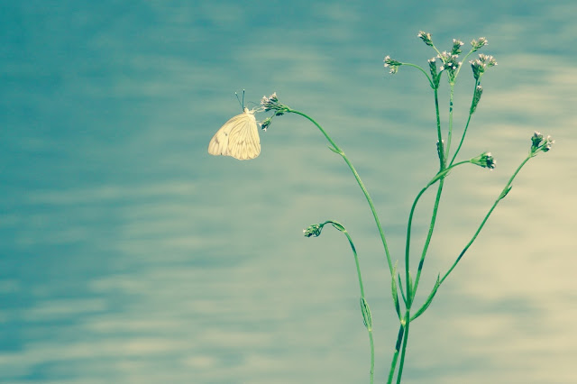 Butterfly by the River