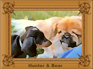 Hunter & Bear
