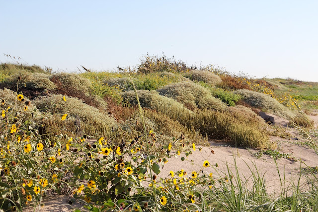 Fall Dunes at Matgorda Beach-Matagorda, Texas