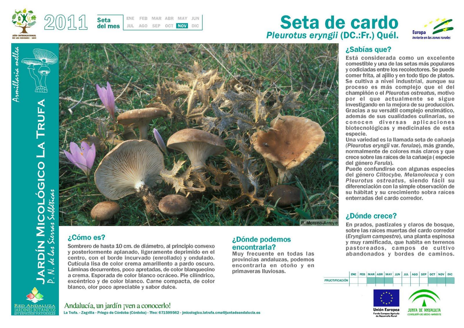Pasi n por el campo las ra ces del suelo los hongos for Jardin micologico la trufa