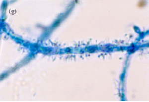 BioFilmBioFertilizer-blog-post