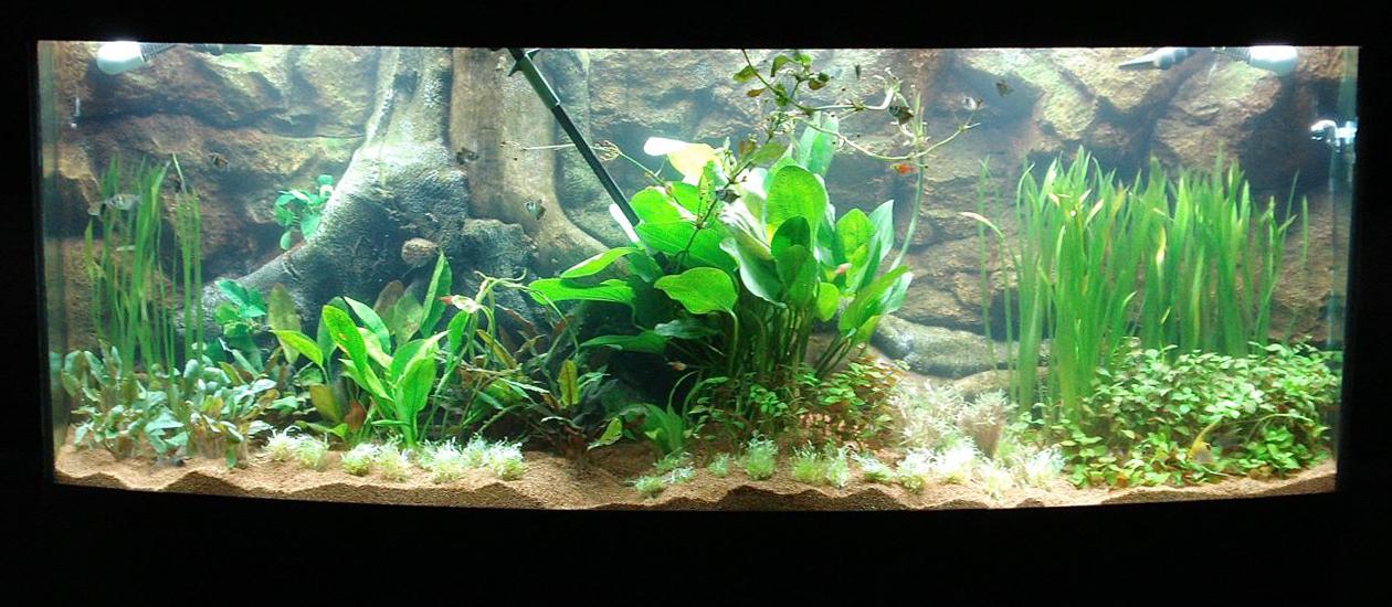 3d gun image 3d aquarium backgrounds for Fish tank backdrop
