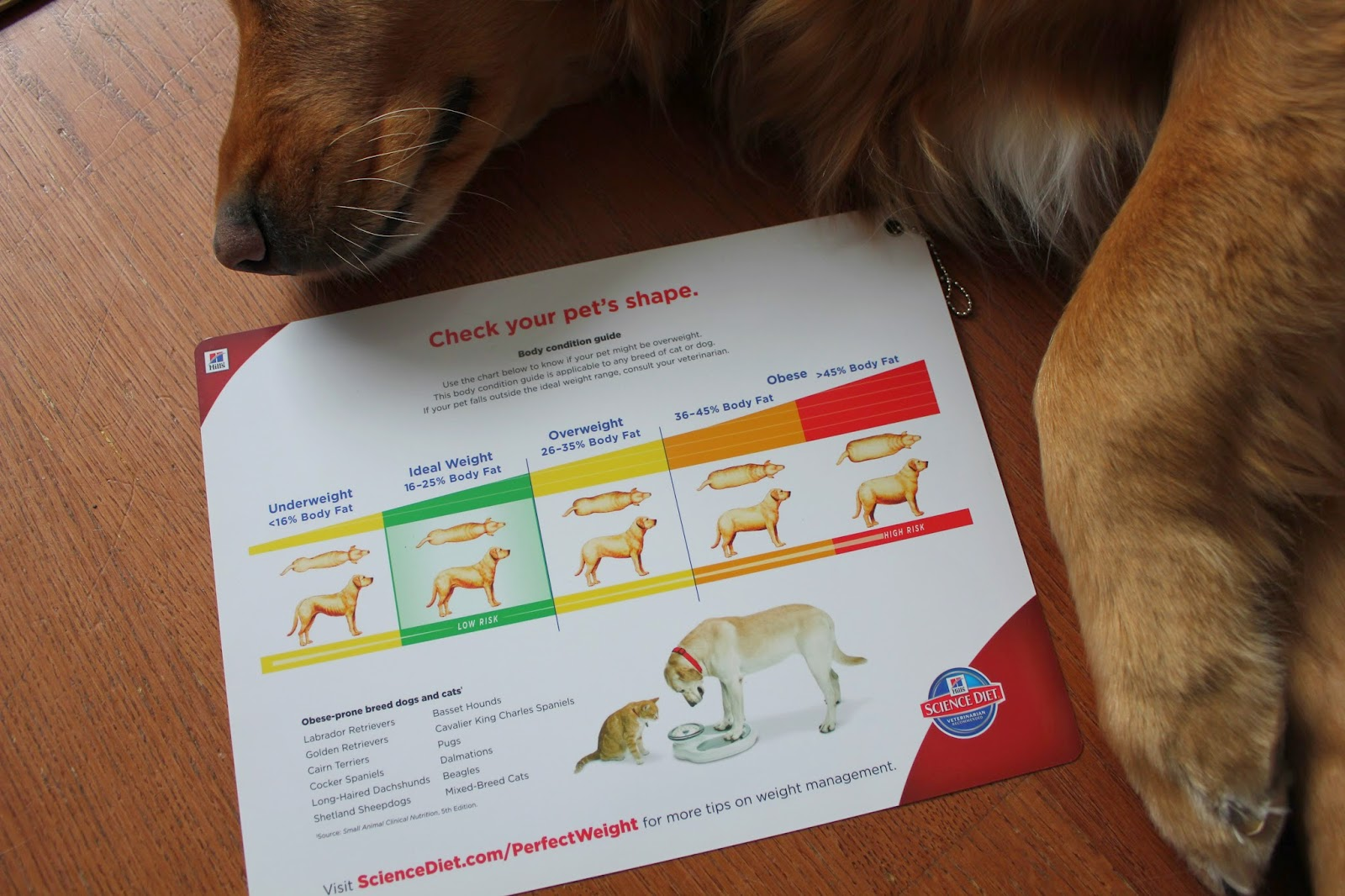 chart showing if your dog is over weight