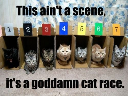 This Ain't A Scene - It's A Goddamn Cat Race