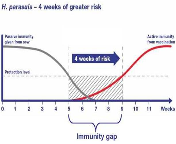 """Hình 4.1 Đồ thị biểu hiện khoảng cách """"miễn dịch"""" – 4 tuần nguy cơ cao"""