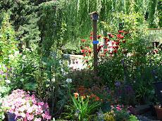 Butterfly Garden Summer 2011