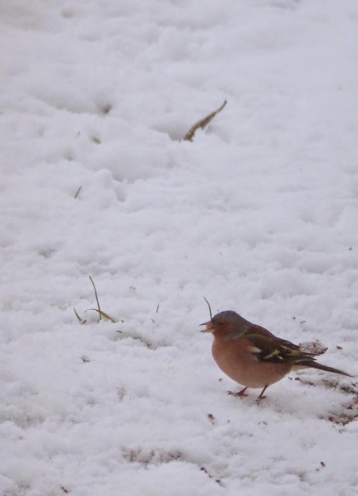 Blog non identifi l 39 hiver et les oiseaux du jardin - Faire peur aux oiseaux jardin ...