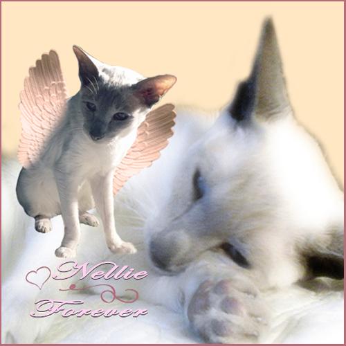 ❤️ Nellie Forever ❤️