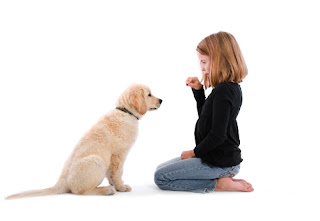 dog training tips for long lasting friendship