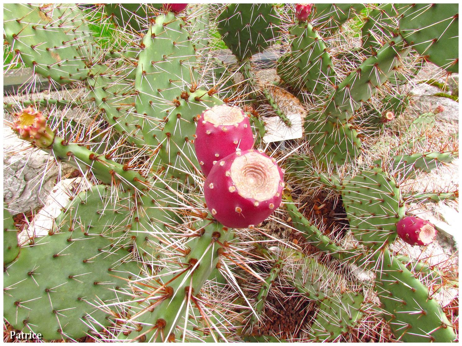 Blog photos de patrice balade jardin des plantes grenoble for Au jardin des plantes chambery