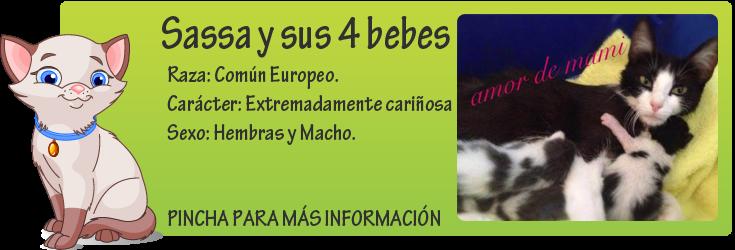 http://mirada-animal-toledo.blogspot.com.es/2014/07/sasa-y-sus-4-bebes.html