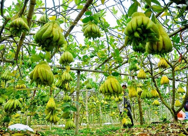 Trái cây chưng Tết độc và lạ