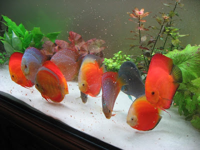 Janusz Zajonzs Dicus Fish Aquarium