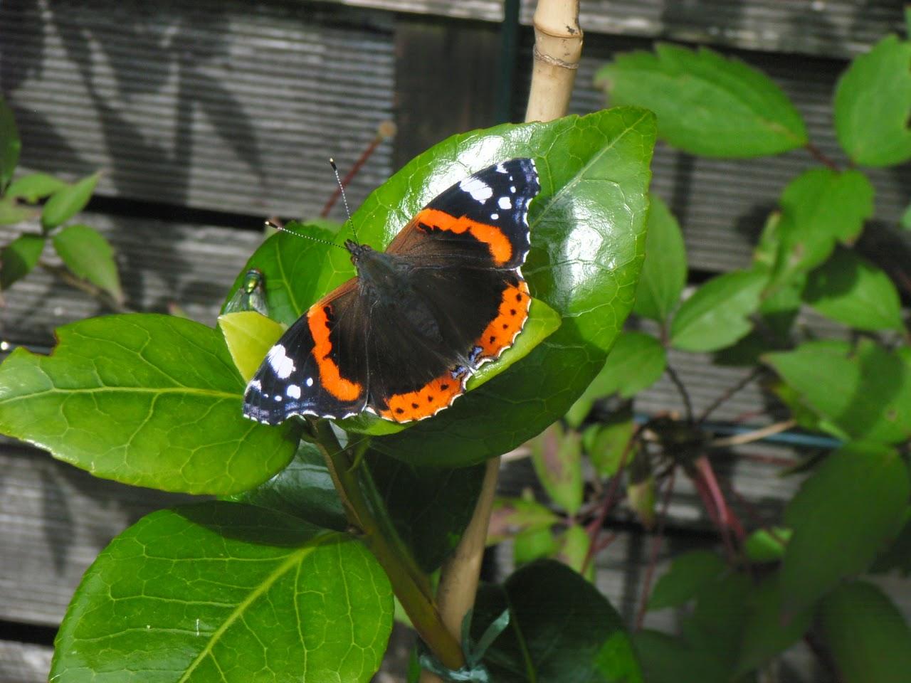 *Schmetterling-Garten*