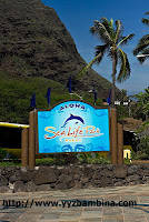 slp Young families will love Sea Life Park in Hawaii