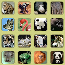 Recursos Tic Infantil animales Recursos Tic Infantil home - imagenes de animales domesticos y salvajes