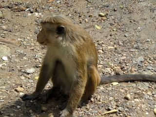 Animaux dégoûtants au Sri Lanka