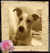 My Blog Dog