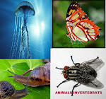 Animals Invertebrats