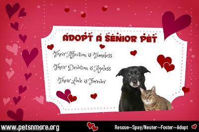 dog, cat, pet, animal, senior pet, adopt, www.petsnmore.org, grow old