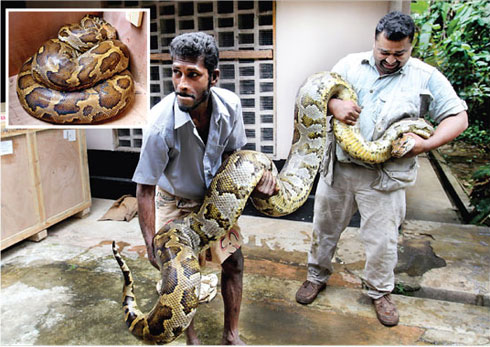 ... Python Found in sri lanka : Gossip Lanka News And Sri Lanka Hot News