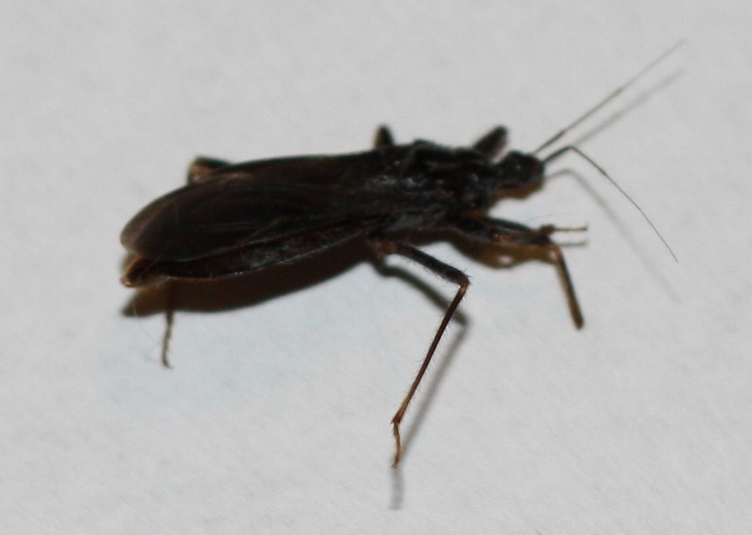 3  is about an inch long from end to antennae  made a hissy clicky  noise  and bit me  Mystery Bug B are small skittery bugs that prefer cool   dark. Bug Identification   Insects Bugs   Ask MetaFilter